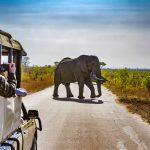Oplevelser samt frivilligt arbejde i Afrika